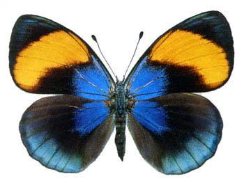 Travis Scott  Butterfly Effect  YouTube